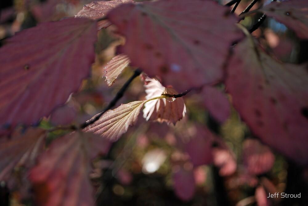 pink sunshine by Jeff stroud