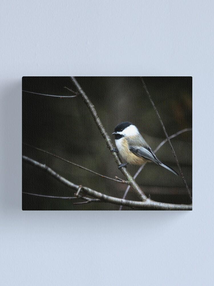 Alternate view of Chickadee & branch Canvas Print
