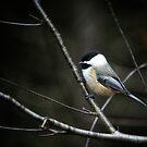 Chickadee & branch by debfaraday