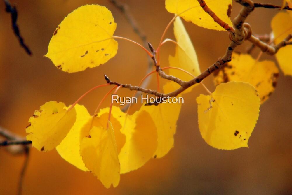 Golden Aspen Leaves by Ryan Houston