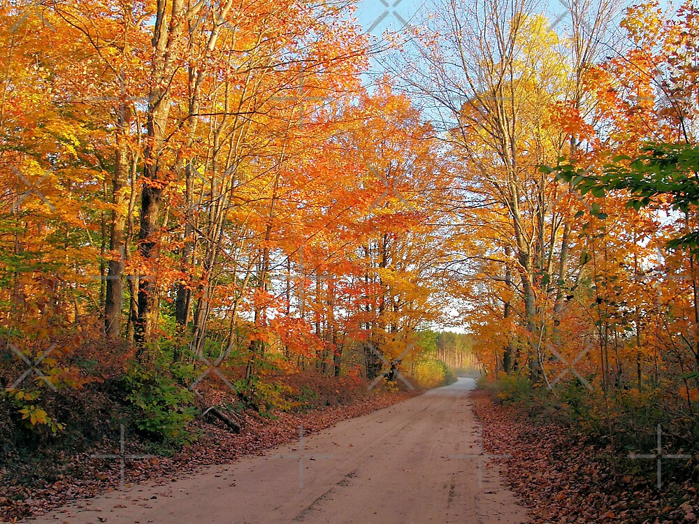Sunset Trail in Autumn by Megan Noble