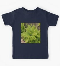Ferns Kids Clothes