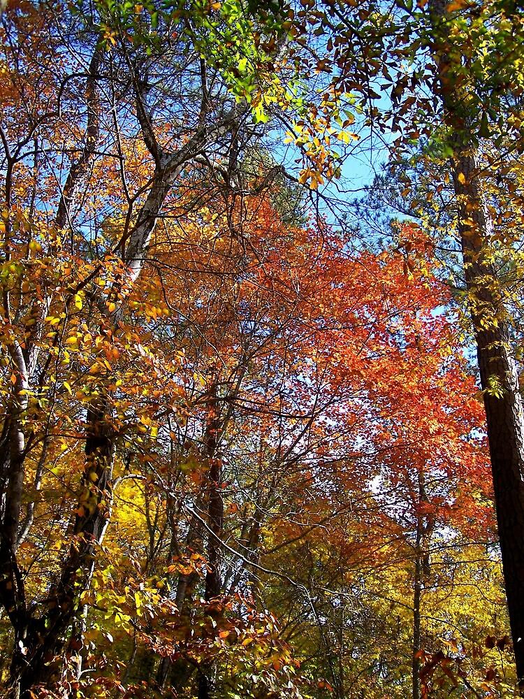 Autumn Forest by Shayef