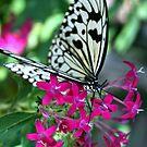 butterfly on flowers by Sheila McCrea