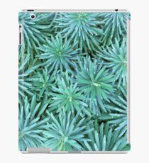 Euphorbien-Dschungel iPad-Hülle & Klebefolie