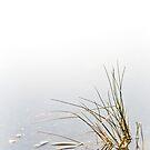 Weir Reeds by FuriousEnnui