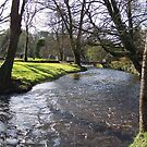 Blarney Castle - River by Shannon McLean
