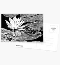 A frog's life in black and white Postcards