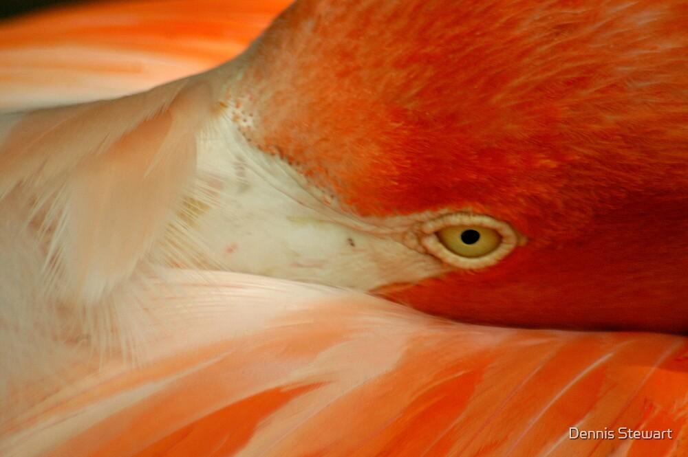 Flamingo Resting by Dennis Stewart