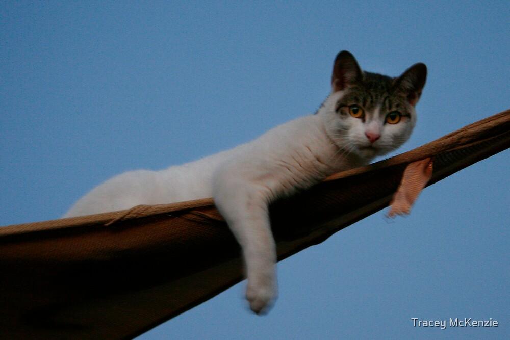 Danger Kitty #2 by Tracey McKenzie