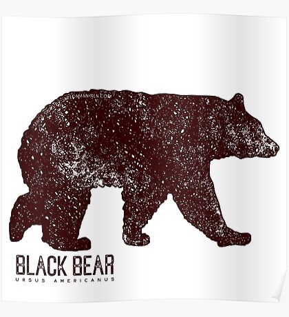 Black Bear Walking Poster
