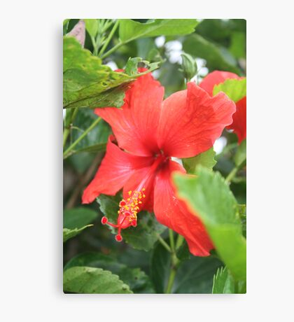 Single Hibiscus Canvas Print