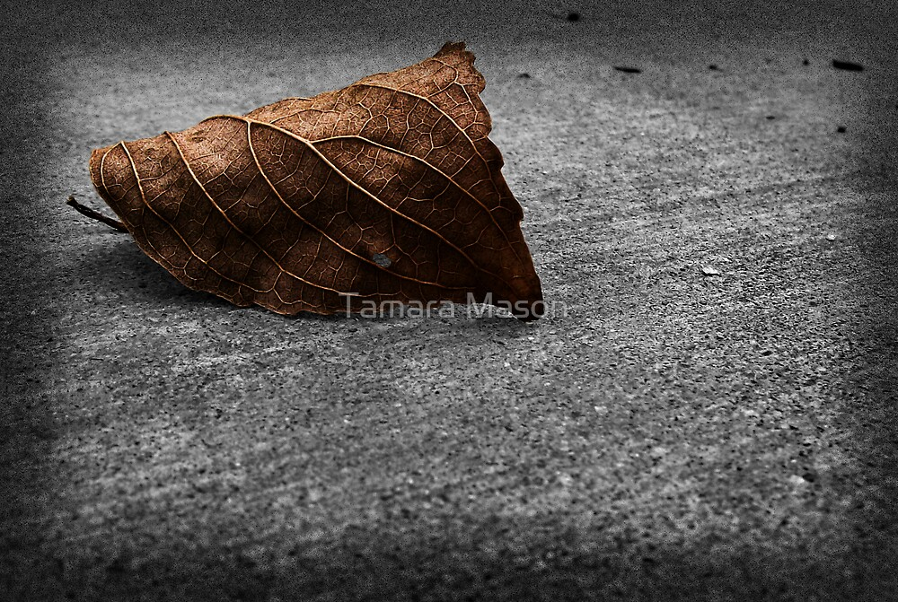 Fall is here... by Tamara Mason