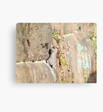 Squirrel on the Sixth Street Embankment, Abandoned Pennsylvania Railroad Embankment, Jersey City, New Jersey  Metal Print