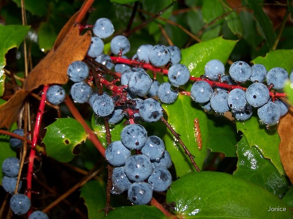 Purple Oregon Grapes by Jonice