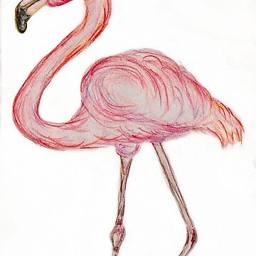 Pink Flamingo  by cphil1992