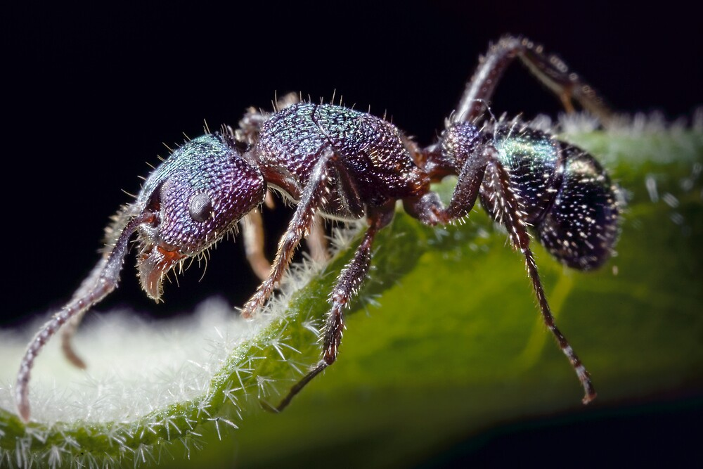 Ant by Damabelle