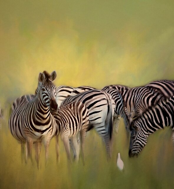 Zebras. by Lyn Darlington