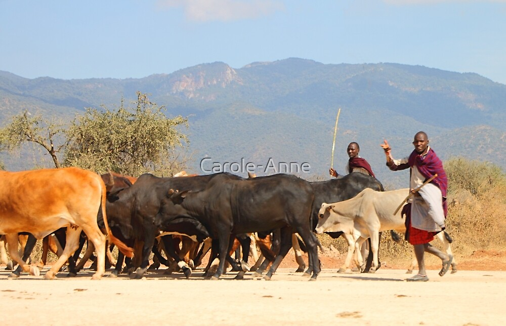 Maasai (or Masai) Herders with Cattle, on the Road, Tanzania   by Carole-Anne