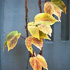 A Touch Of Autumn In Downtown Seattle by Anya Adora