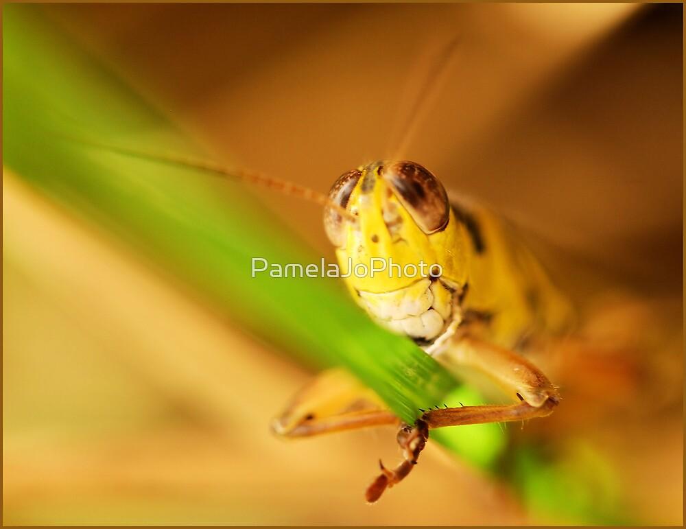 Grasshopper by PamelaJoPhoto