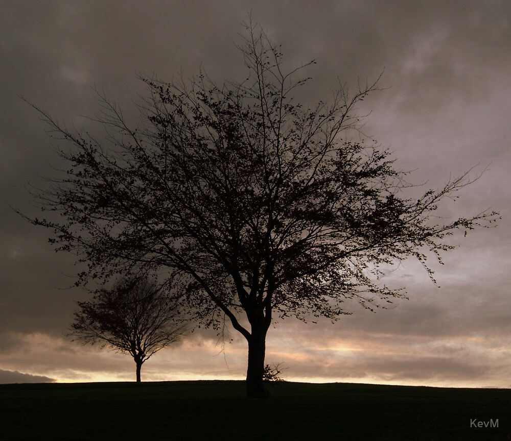 Silhouetted Trees at Dusk by KevM