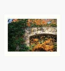 Framing Fall Art Print