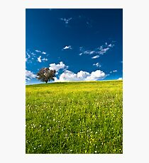 single tree on bright meadow Photographic Print