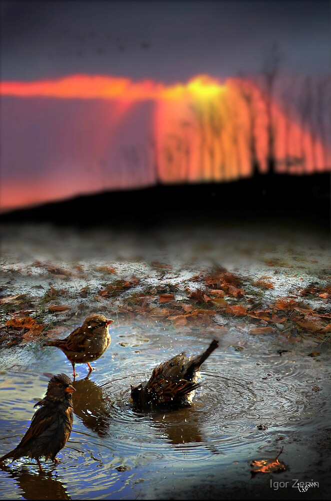 Bird by Igor Zenin