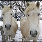 Snow White x Two! by Marilyn Grimble