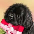 Newfie face with present  by Patricia Reeder Eubank