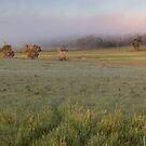 Morning Mist by Matt Fricker
