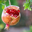 Pomegranate by Matt Fricker