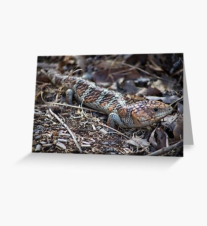 Western Bobtail Greeting Card