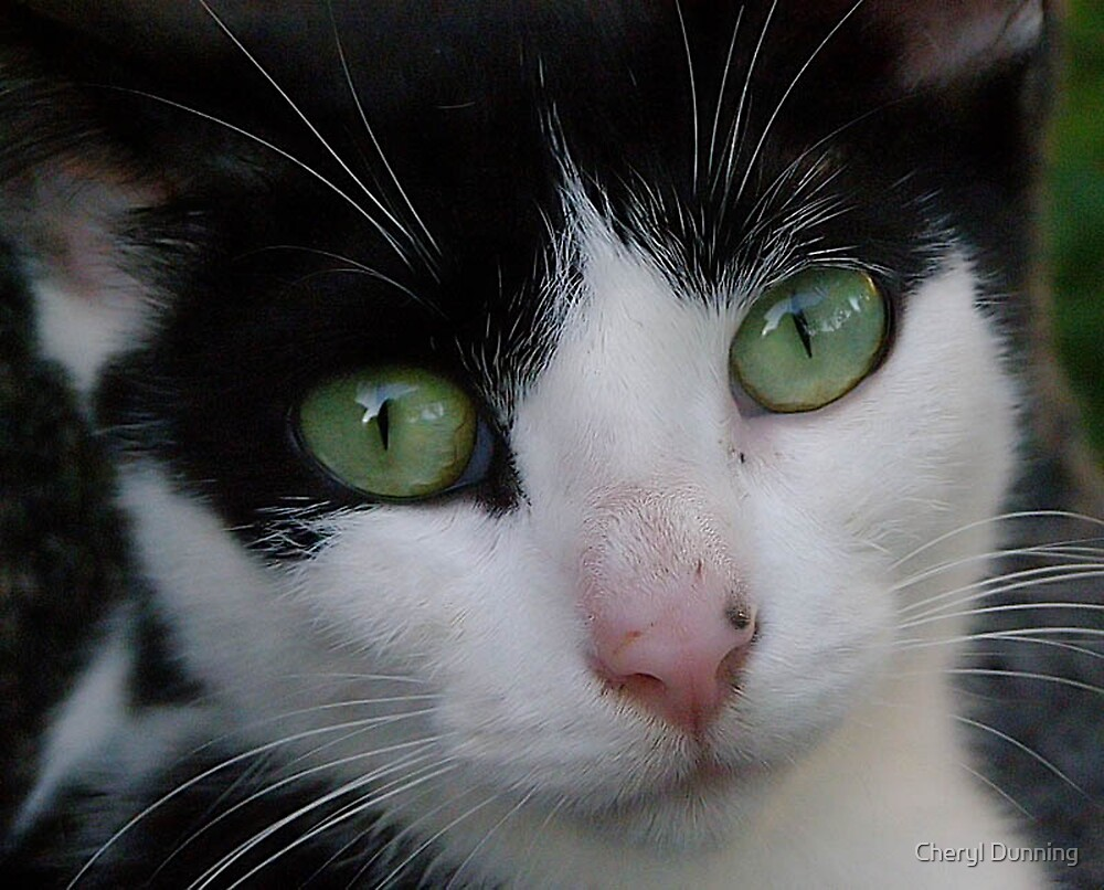 look into my eyes by Cheryl Dunning