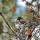 Fall Robin by Eileen McVey