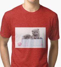 Cute gray kitty Scottish fold Tri-blend T-Shirt