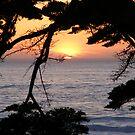 Sunset at Carmel Beach by Sandra Gray
