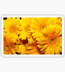 Yellow gerberas  Sticker