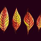 Four Red And Yellow Autumn Leaves by Boriana Giormova