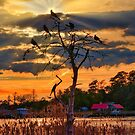 The Bird Tree Near Sunset by TJ Baccari Photography