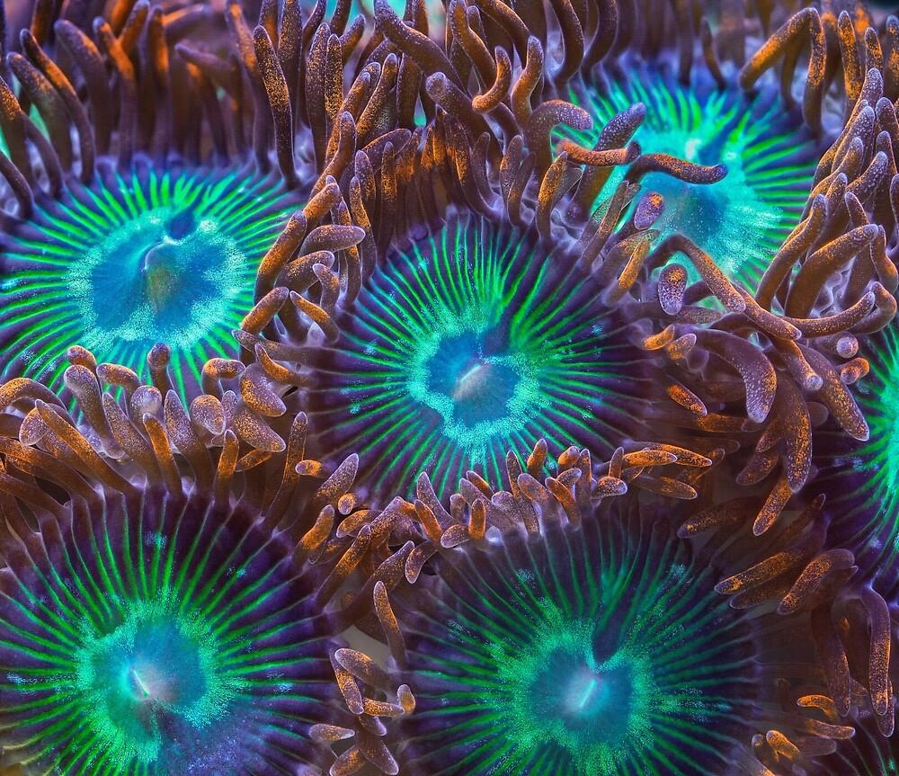 Zoanthids by BioQuest Studios