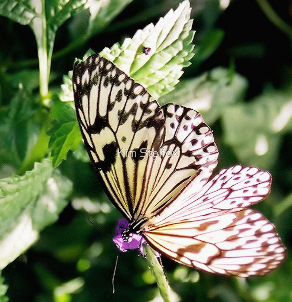 butterfly  by Kim Stelfox