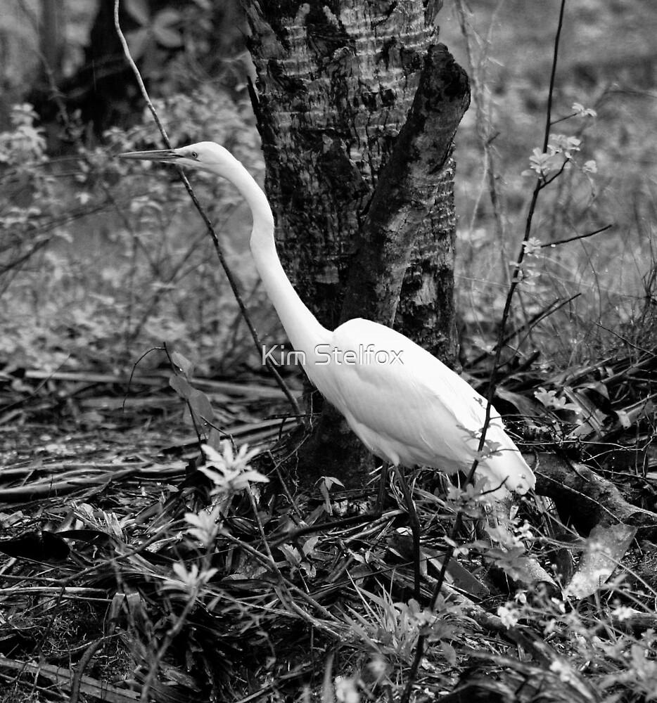 heron black and white by Kim Stelfox
