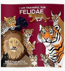 I Am Thankful For Felidae Poster