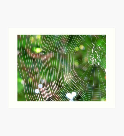 Spider's web Art Print
