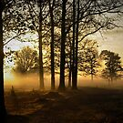 Morning light in the Forest by ienemien