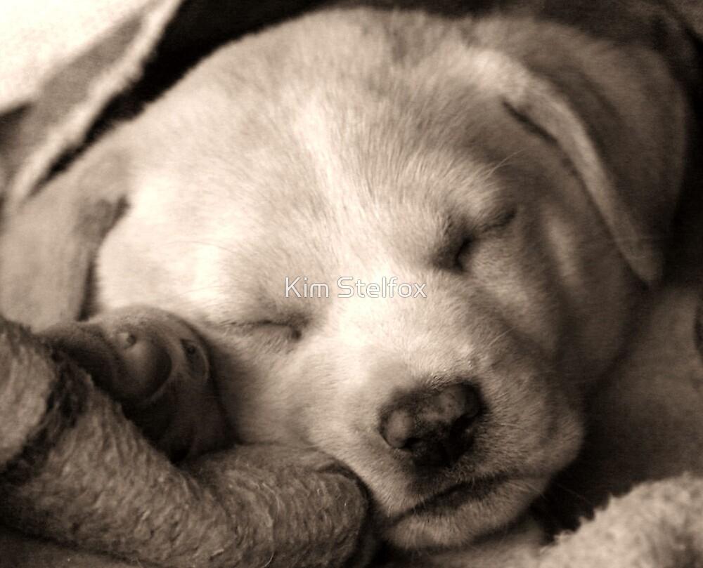 puppy in a blanket by Kim Stelfox