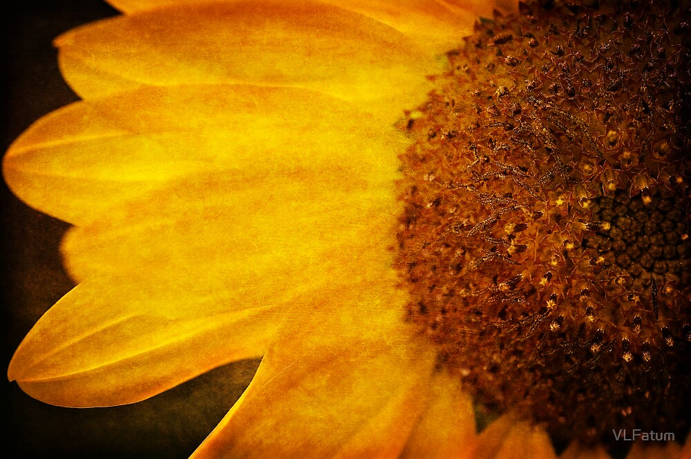 Sunflower by VLFatum