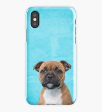 Jersey staffordshire bull terrier iPhone Case/Skin